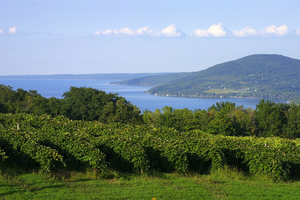 Waneta Lake Vineyard NY