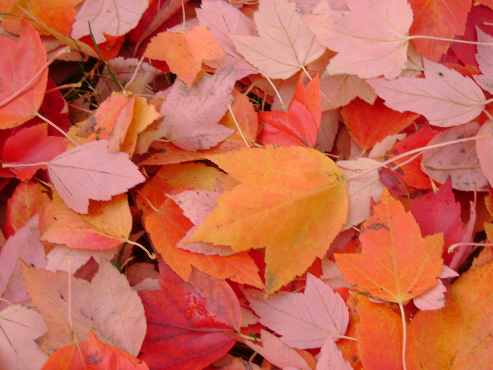 Colorful Leaves in Fall in the Finger Lakes