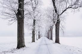 Snow Covered Trees in the Finger Lakes